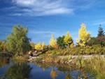 Grand format 800X600. Photo 6: domaine Maizerets (section Arboretum).