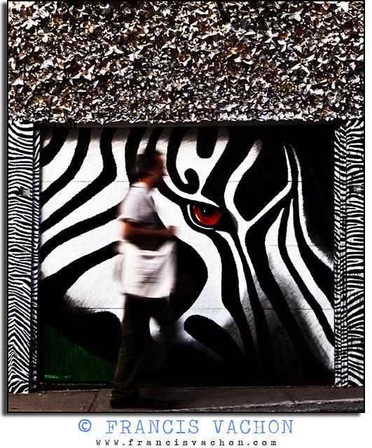 oeil du zebre
