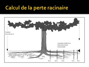 Racines et cime des arbres